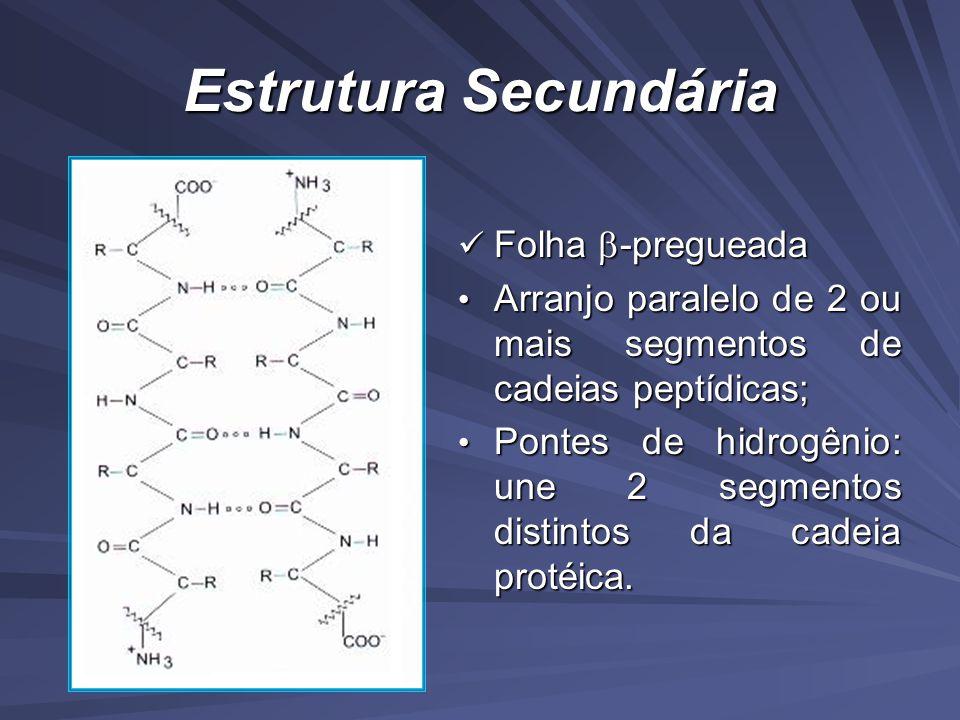 Estrutura Secundária Folha -pregueada