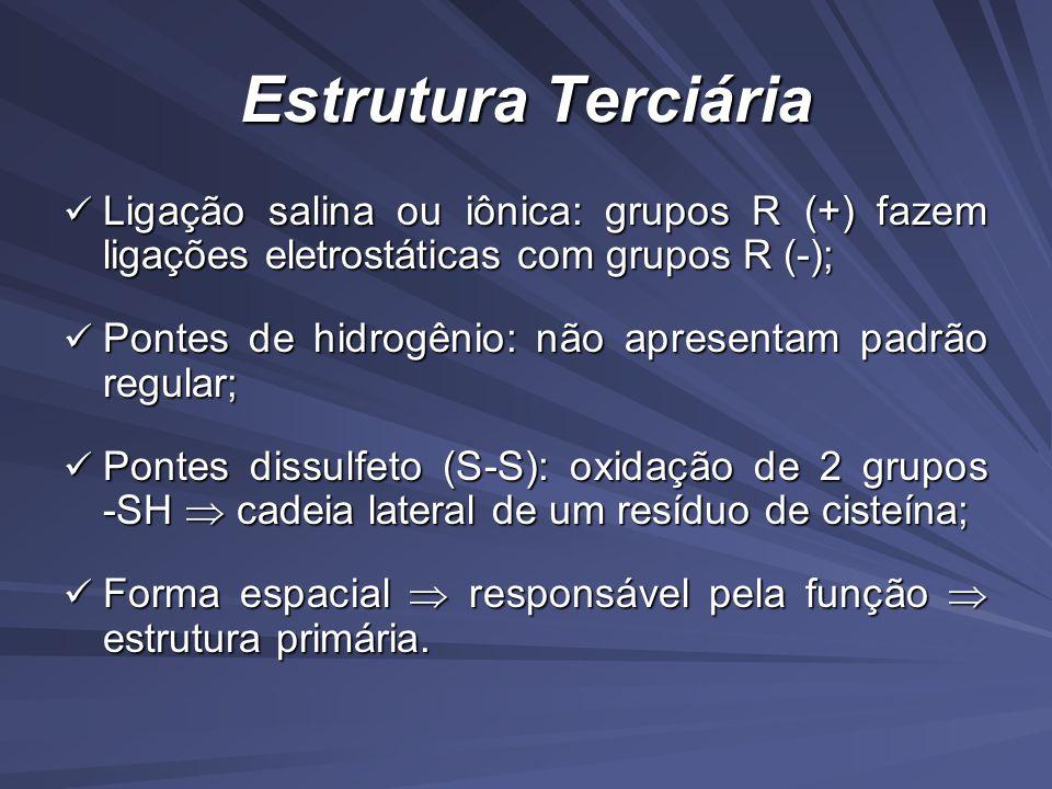 Estrutura Terciária Ligação salina ou iônica: grupos R (+) fazem ligações eletrostáticas com grupos R (-);