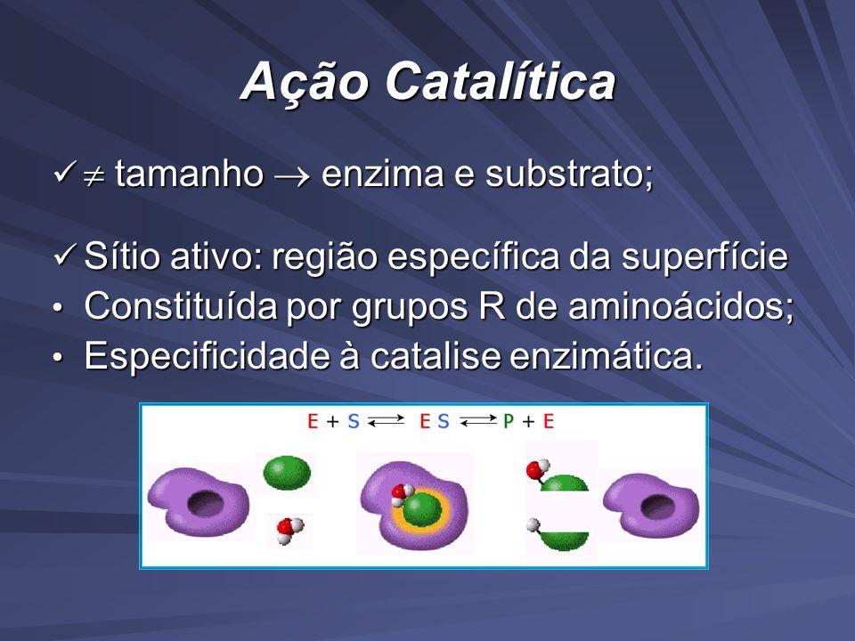 Ação Catalítica  tamanho  enzima e substrato;