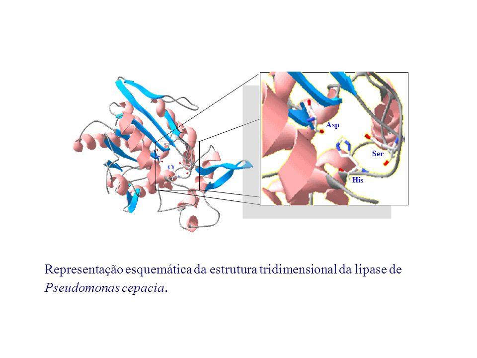 Ser His Asp Representação esquemática da estrutura tridimensional da lipase de Pseudomonas cepacia.