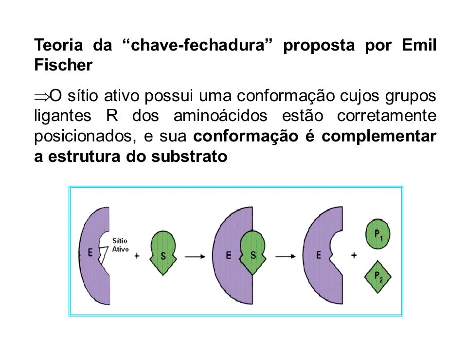Teoria da chave-fechadura proposta por Emil Fischer