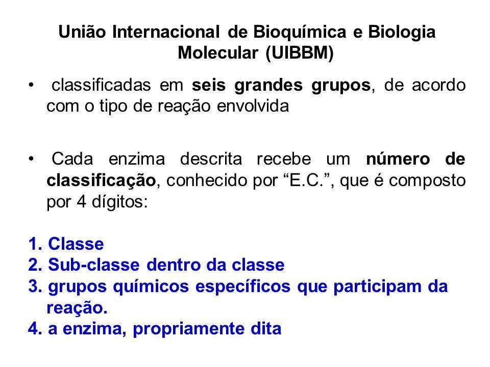 União Internacional de Bioquímica e Biologia Molecular (UIBBM)
