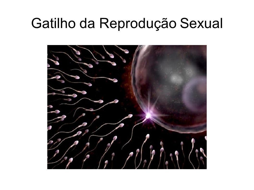 Gatilho da Reprodução Sexual