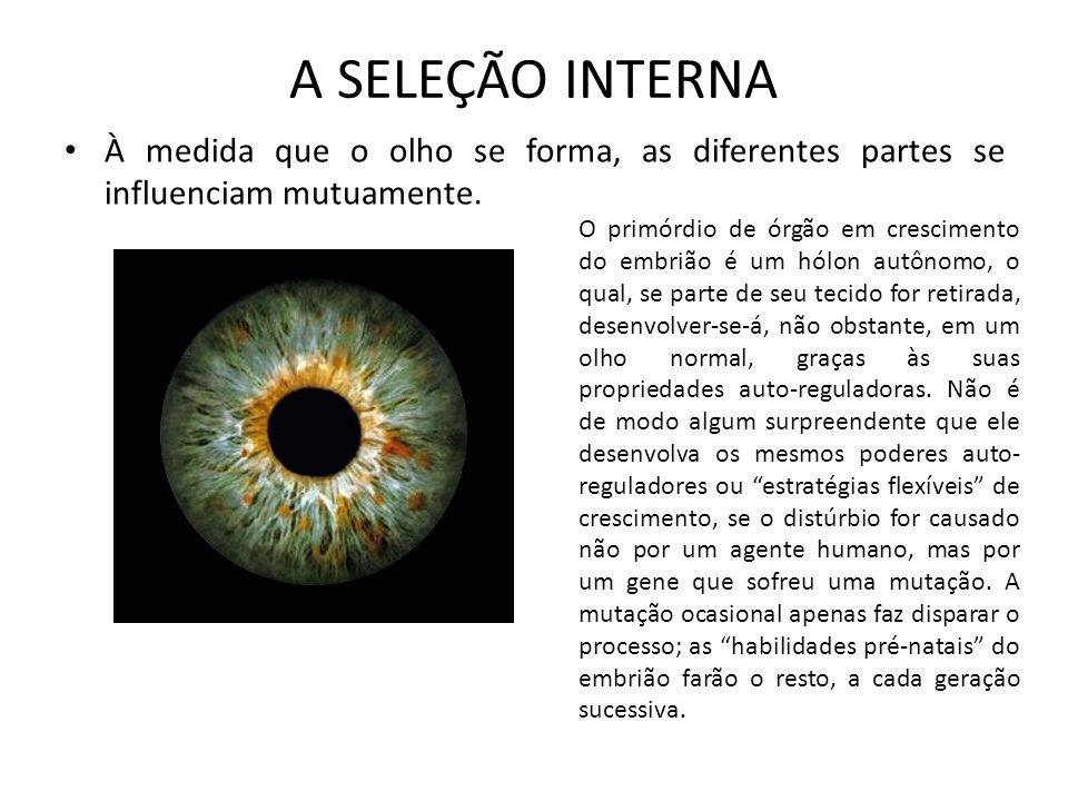 A SELEÇÃO INTERNA À medida que o olho se forma, as diferentes partes se influenciam mutuamente.