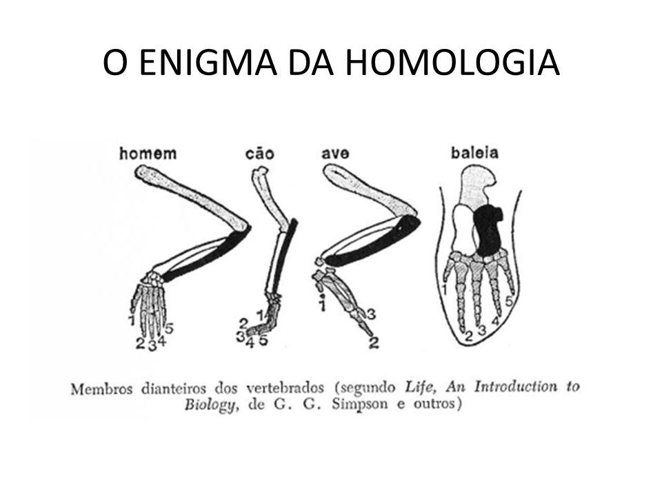 O ENIGMA DA HOMOLOGIA