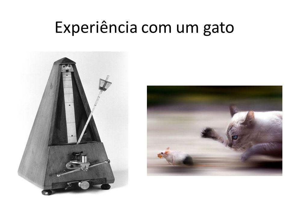 Experiência com um gato
