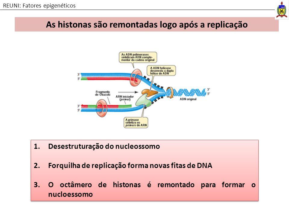 As histonas são remontadas logo após a replicação