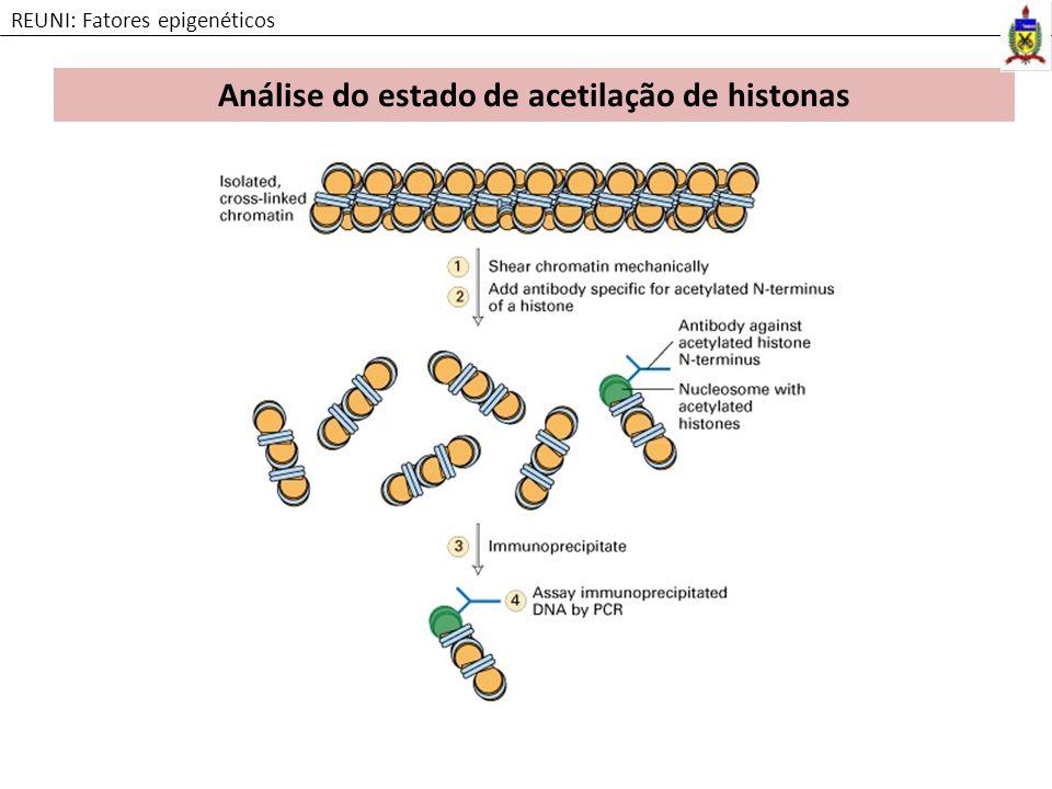Análise do estado de acetilação de histonas