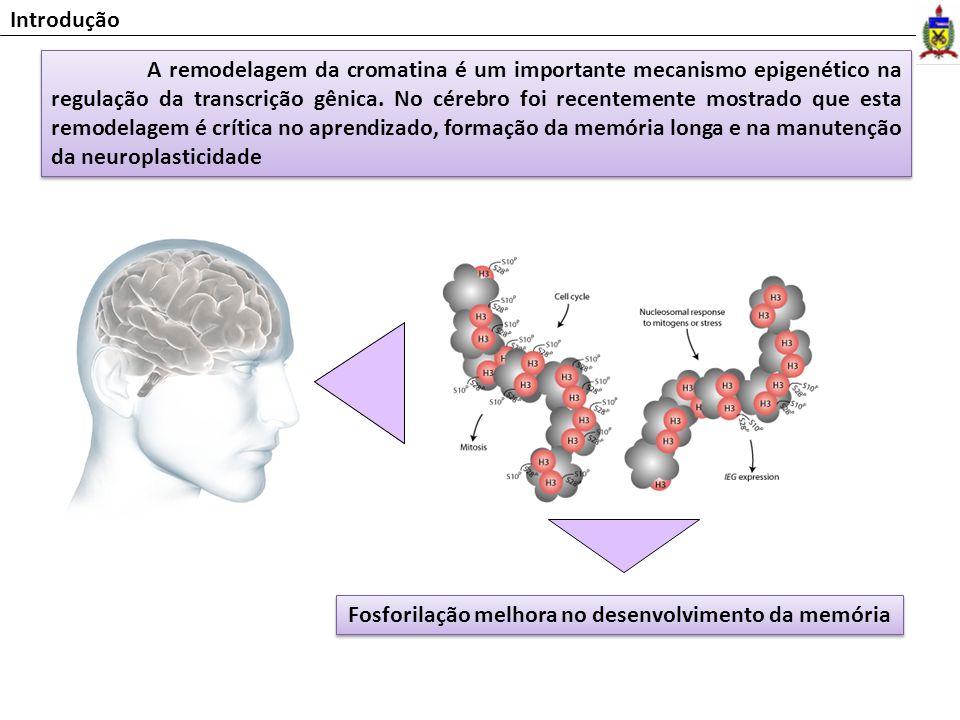 Fosforilação melhora no desenvolvimento da memória