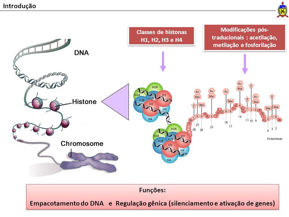Introdução Modificações pós-traducionais : acetilação, metilação e fosforilação. Classes de histonas H1, H2, H3 e H4.