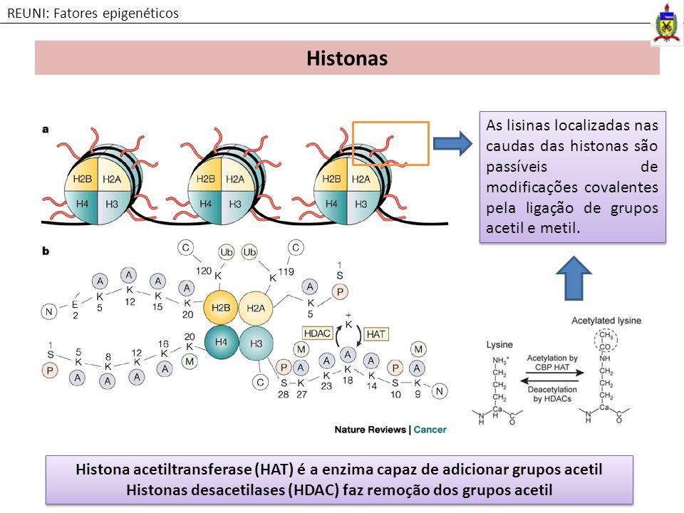 Histonas desacetilases (HDAC) faz remoção dos grupos acetil
