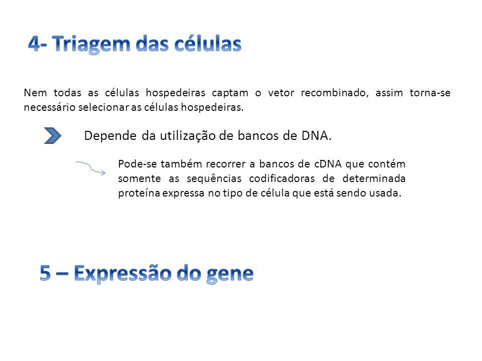 4- Triagem das células 5 – Expressão do gene