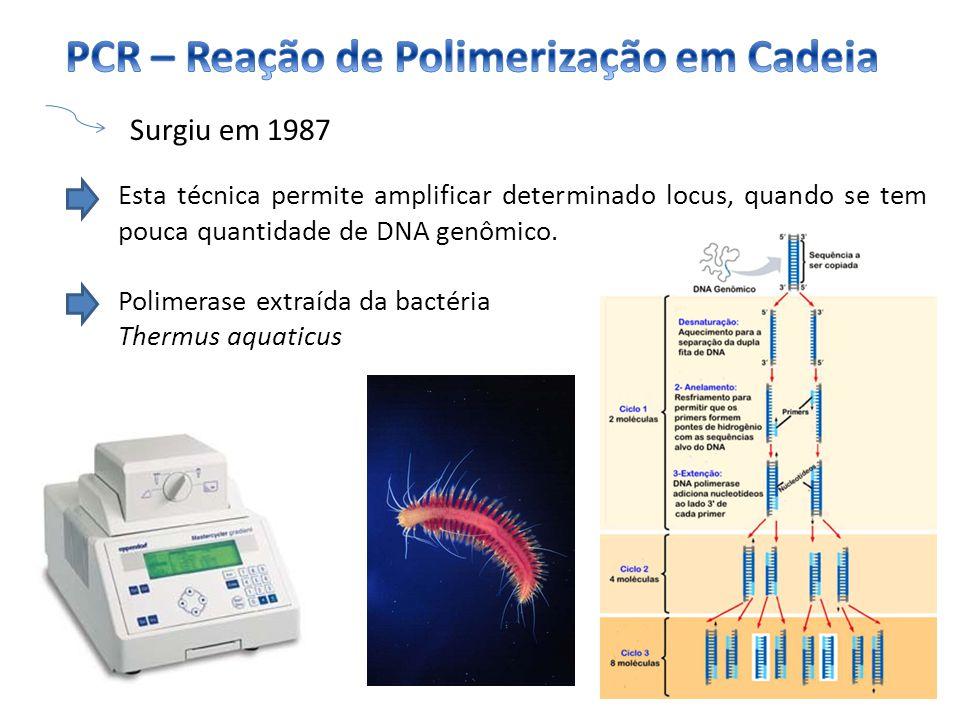 PCR – Reação de Polimerização em Cadeia