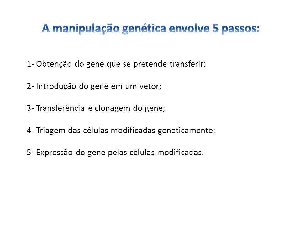 A manipulação genética envolve 5 passos: