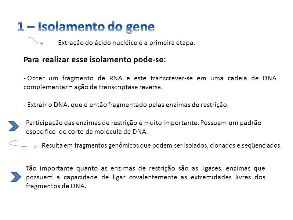 1 – Isolamento do gene Para realizar esse isolamento pode-se: