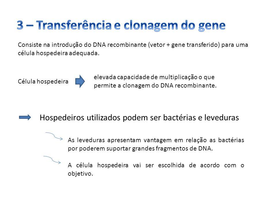3 – Transferência e clonagem do gene