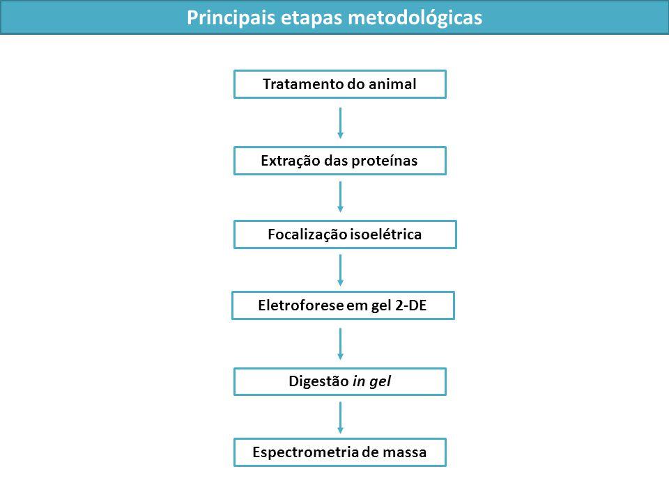 Principais etapas metodológicas