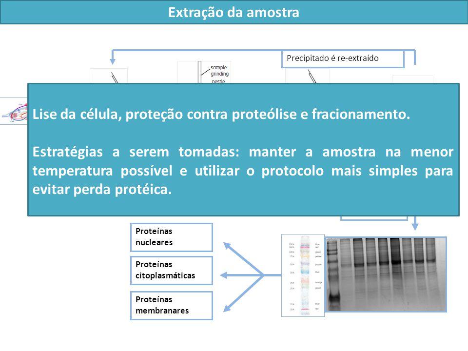 Lise da célula, proteção contra proteólise e fracionamento.
