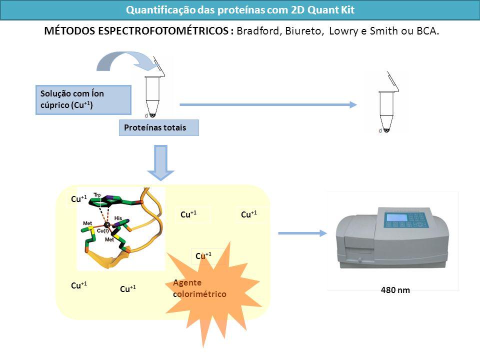 Quantificação das proteínas com 2D Quant Kit