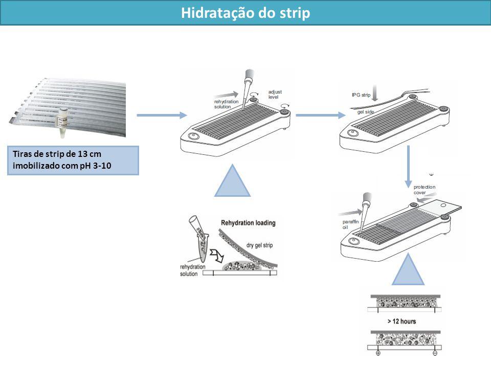 Hidratação do strip Tiras de strip de 13 cm imobilizado com pH 3-10