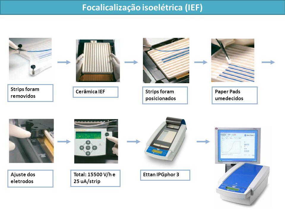 Focalicalização isoelétrica (IEF)