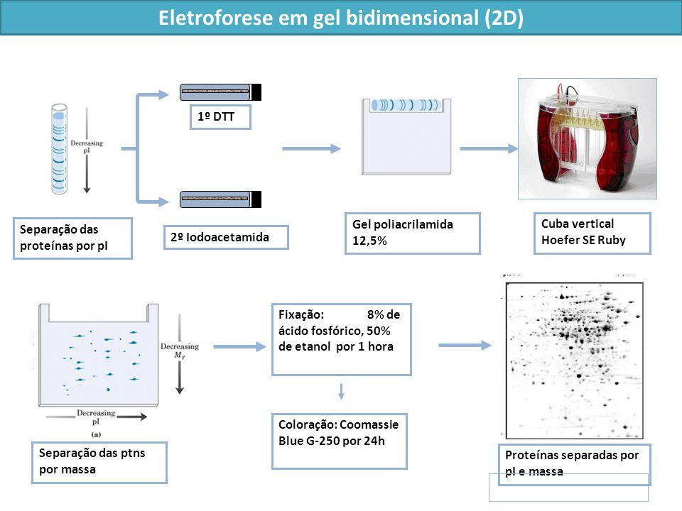 Eletroforese em gel bidimensional (2D)