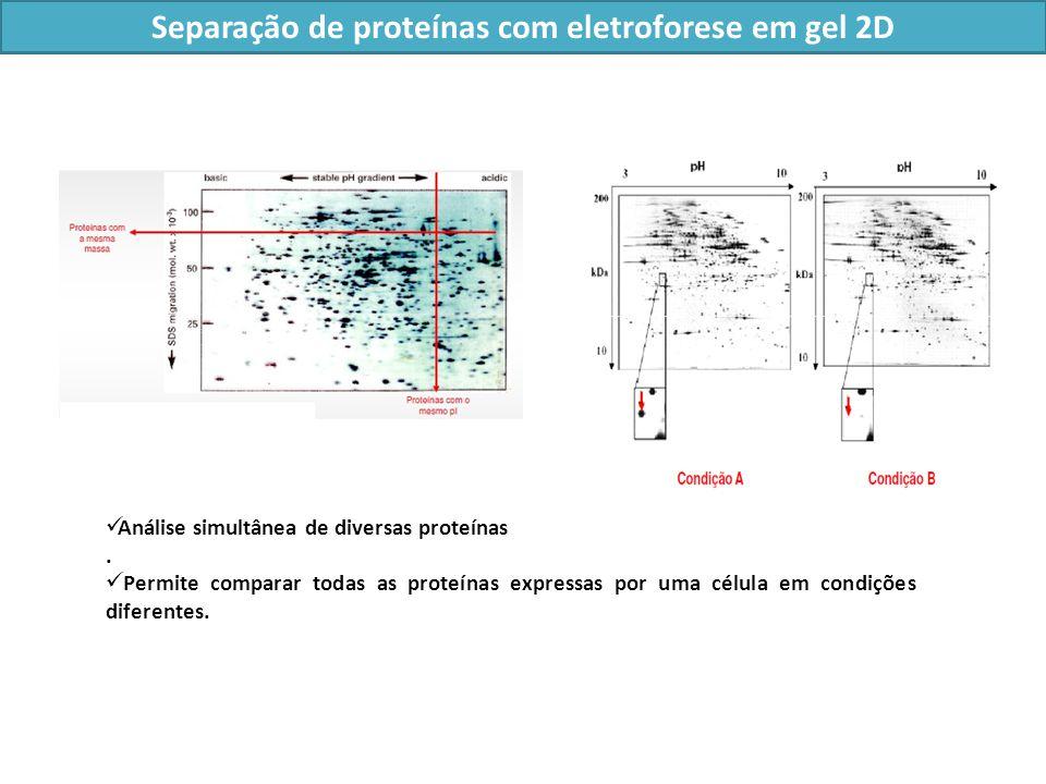Separação de proteínas com eletroforese em gel 2D