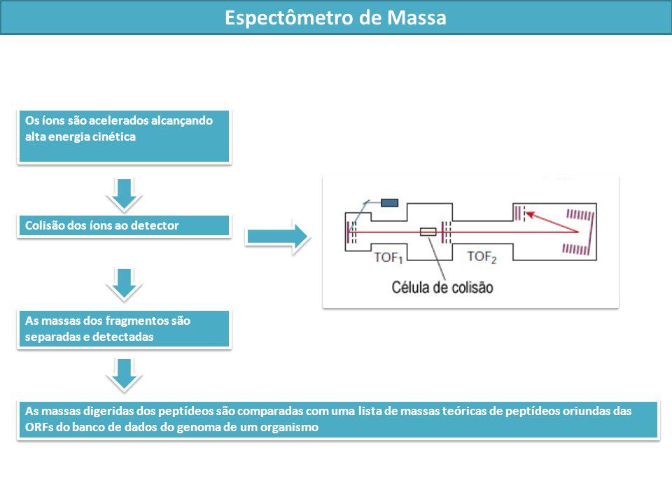 Espectômetro de Massa Os íons são acelerados alcançando alta energia cinética. Colisão dos íons ao detector.