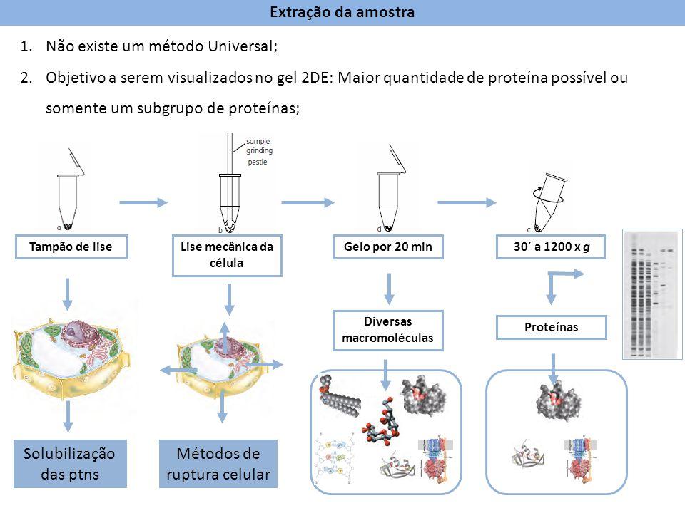 Lise mecânica da célula Diversas macromoléculas