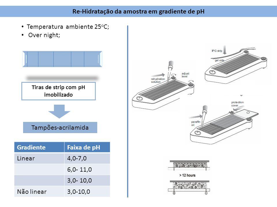 Re-Hidratação da amostra em gradiente de pH