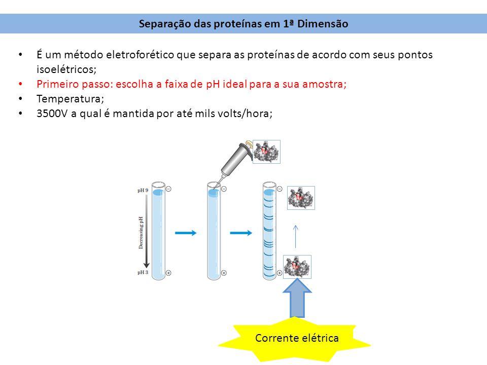 Separação das proteínas em 1ª Dimensão