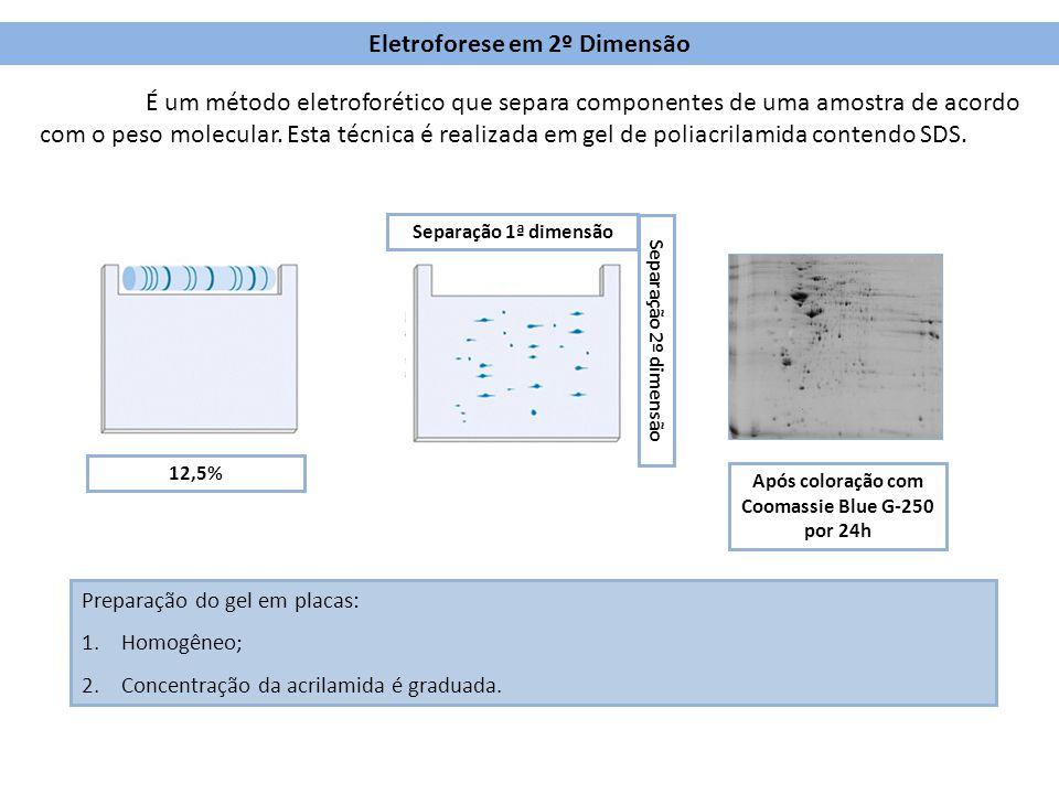 Eletroforese em 2º Dimensão