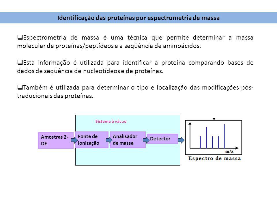 Identificação das proteínas por espectrometria de massa
