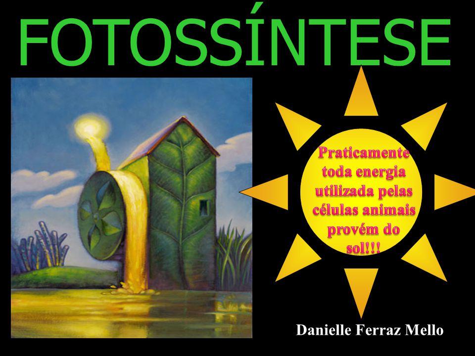 FOTOSSÍNTESE Praticamente toda energia utilizada pelas células animais provém do sol!!.