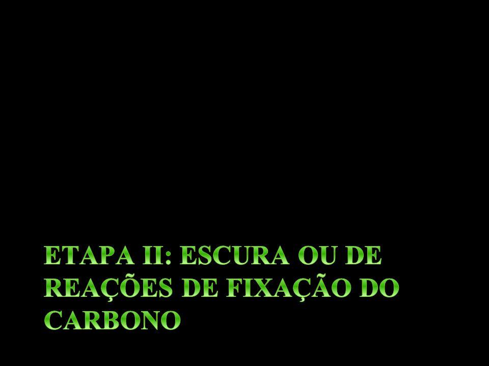 ETAPA II: ESCURA OU DE REAÇÕES DE FIXAÇÃO DO CARBONO