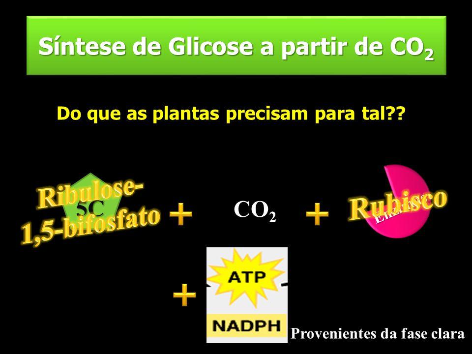 Síntese de Glicose a partir de CO2
