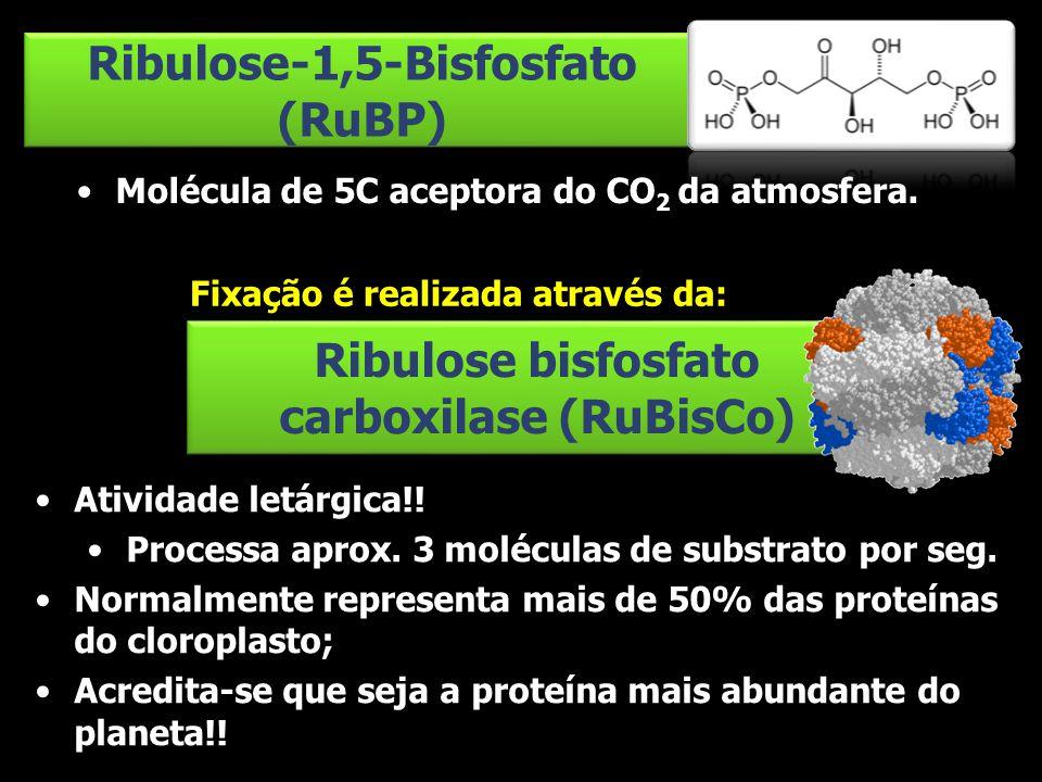 Ribulose-1,5-Bisfosfato (RuBP)