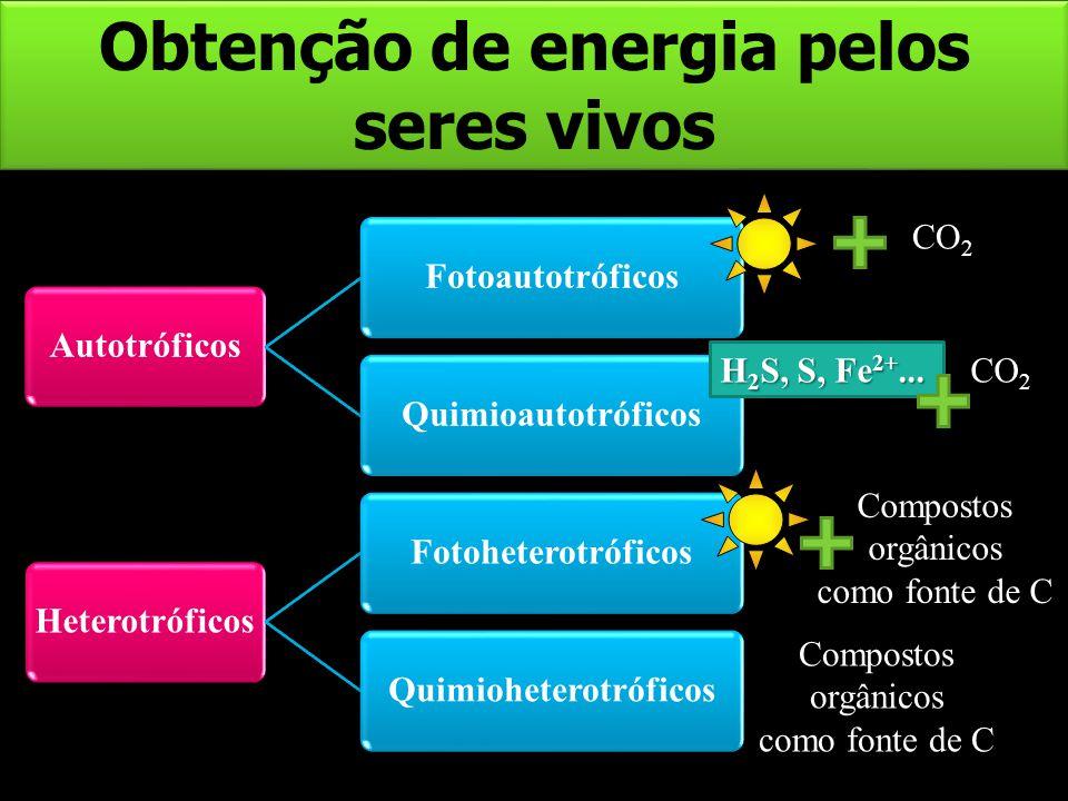 Obtenção de energia pelos seres vivos