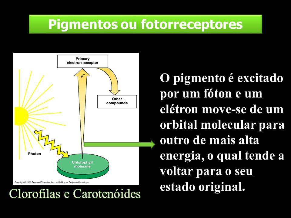 Pigmentos ou fotorreceptores
