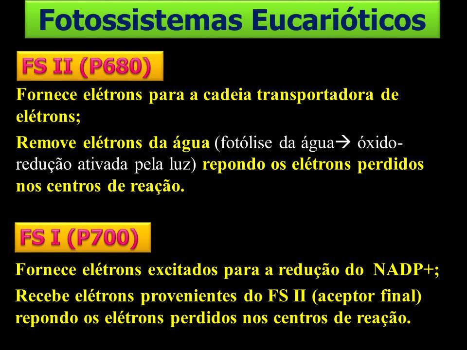 Fotossistemas Eucarióticos