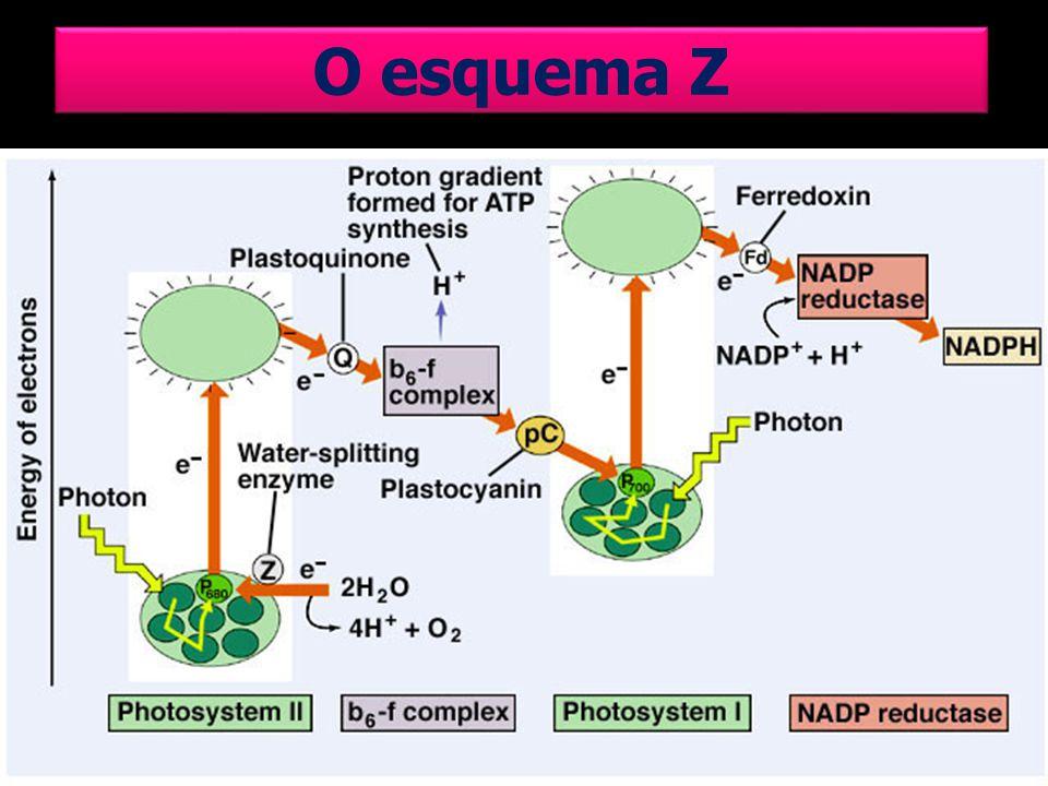 O esquema Z