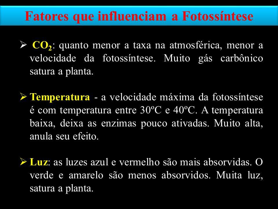 Fatores que influenciam a Fotossíntese