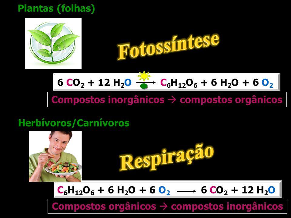 Fotossíntese Respiração
