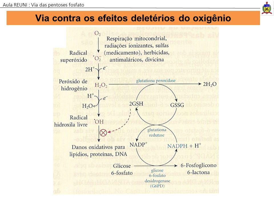 Via contra os efeitos deletérios do oxigênio