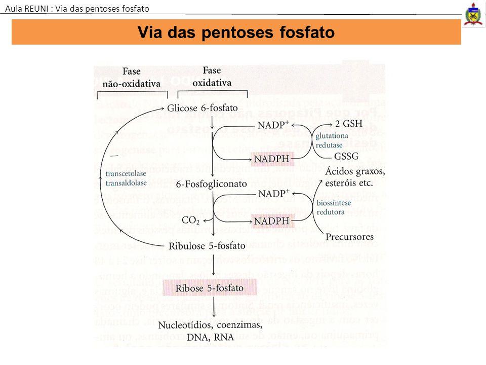Via das pentoses fosfato