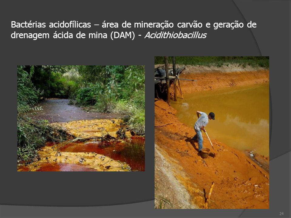 Bactérias acidofílicas – área de mineração carvão e geração de drenagem ácida de mina (DAM) - Acidithiobacillus
