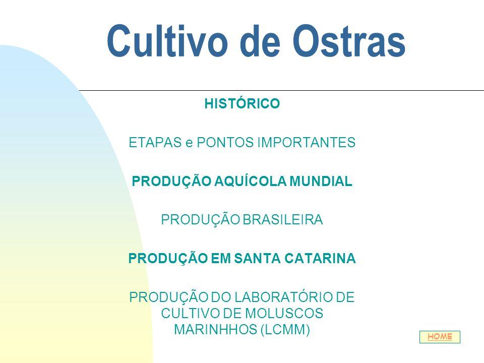 Cultivo de Ostras HISTÓRICO ETAPAS e PONTOS IMPORTANTES