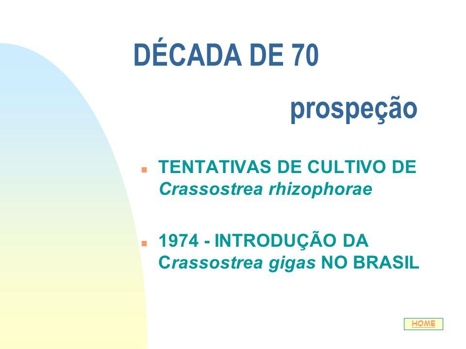 01/04/2017 DÉCADA DE 70 prospeção. TENTATIVAS DE CULTIVO DE Crassostrea rhizophorae.