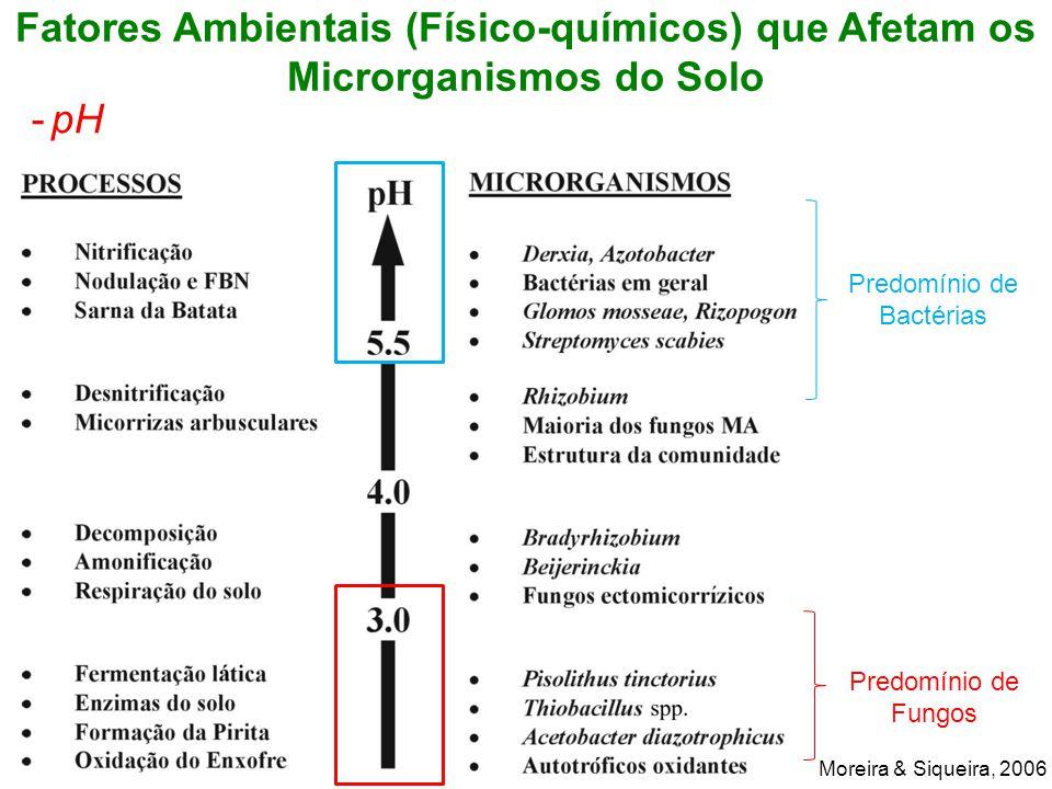 Predomínio de Bactérias