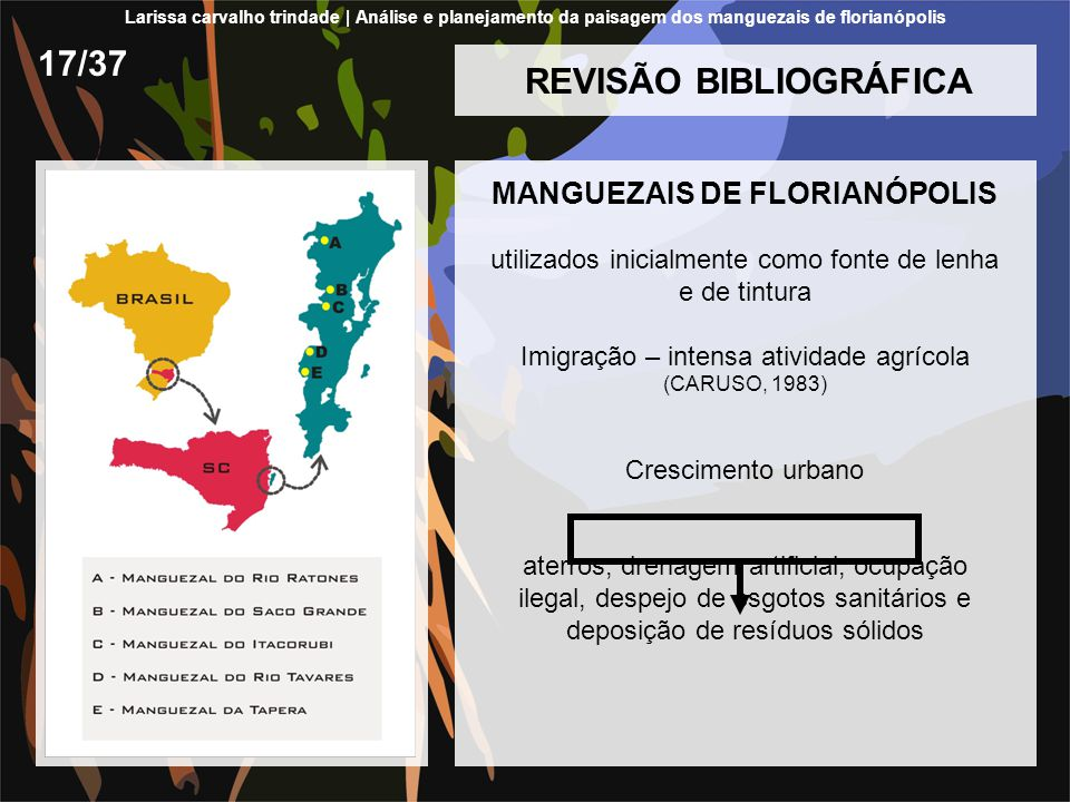 REVISÃO BIBLIOGRÁFICA MANGUEZAIS DE FLORIANÓPOLIS